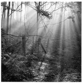 Fence, Parkend Woods, Forest of Dean, 1985, Fay Godwin