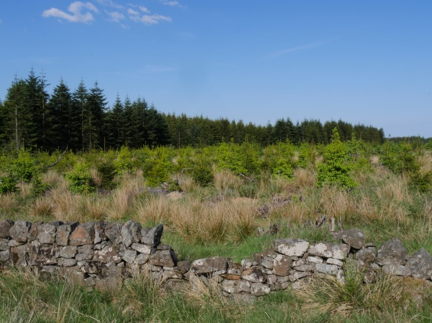 1 - Forestry in Scotland