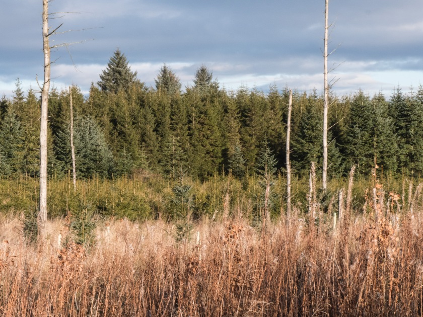 10 -Forestry in Scotland