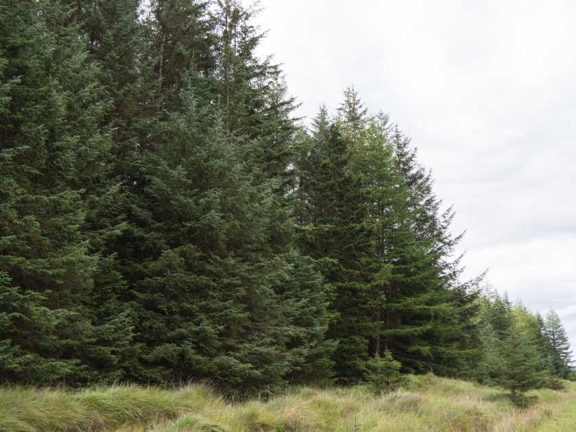 2 - Forestry in Scotland