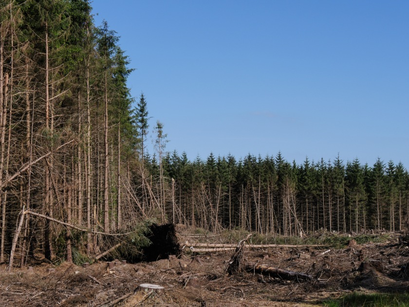 4 - Forestry in Scotland