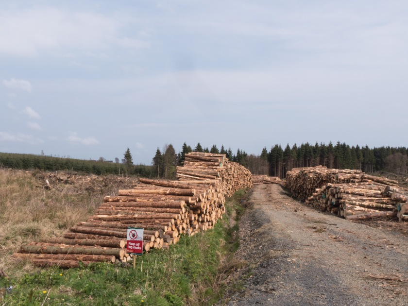 6 - Forestry in Scotland