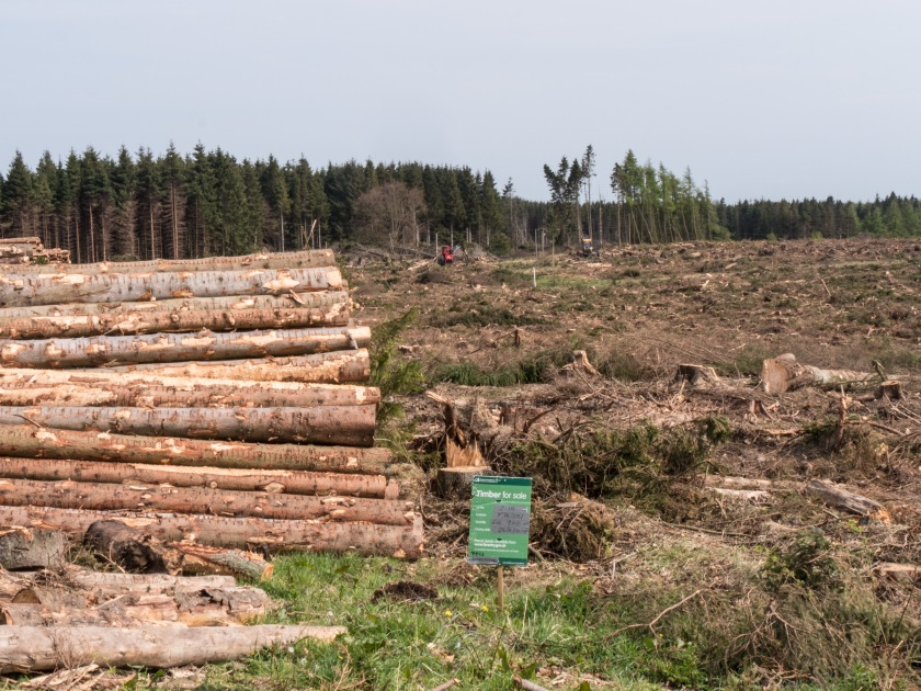8 - Forestry in Scotland