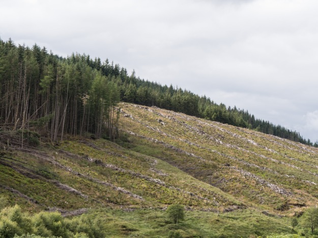 9 - Forestry in Scotland